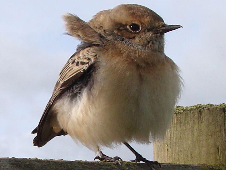 """Clin d'oeil à Romann de celle qu'il avait baptisée """"Laurence des oiseaux""""."""
