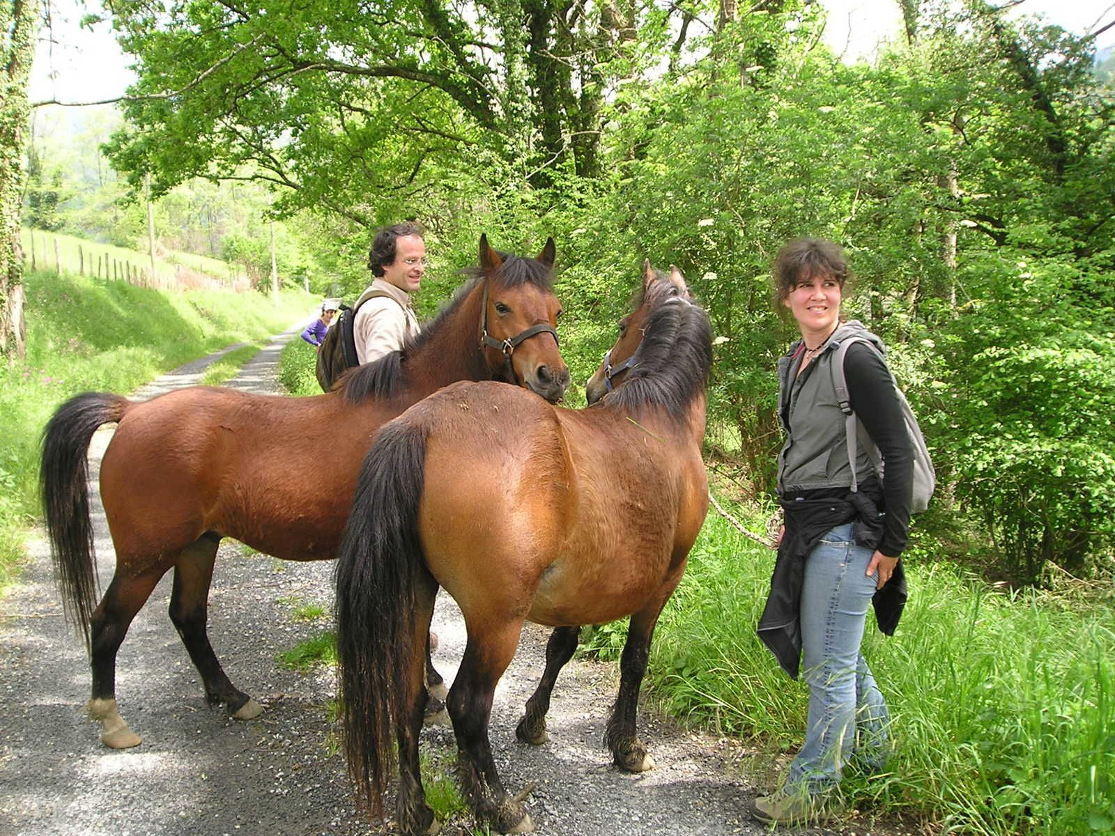Poneys basques et Trait breton, les surprises de la route.