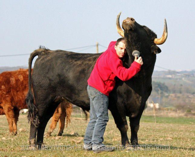 Soutenons &quot&#x3B;Je suis un taureau espagnol&quot&#x3B;.