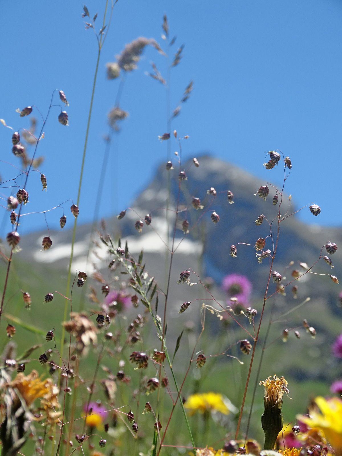 Un nouveau séjour dans les Alpes (suite 2)