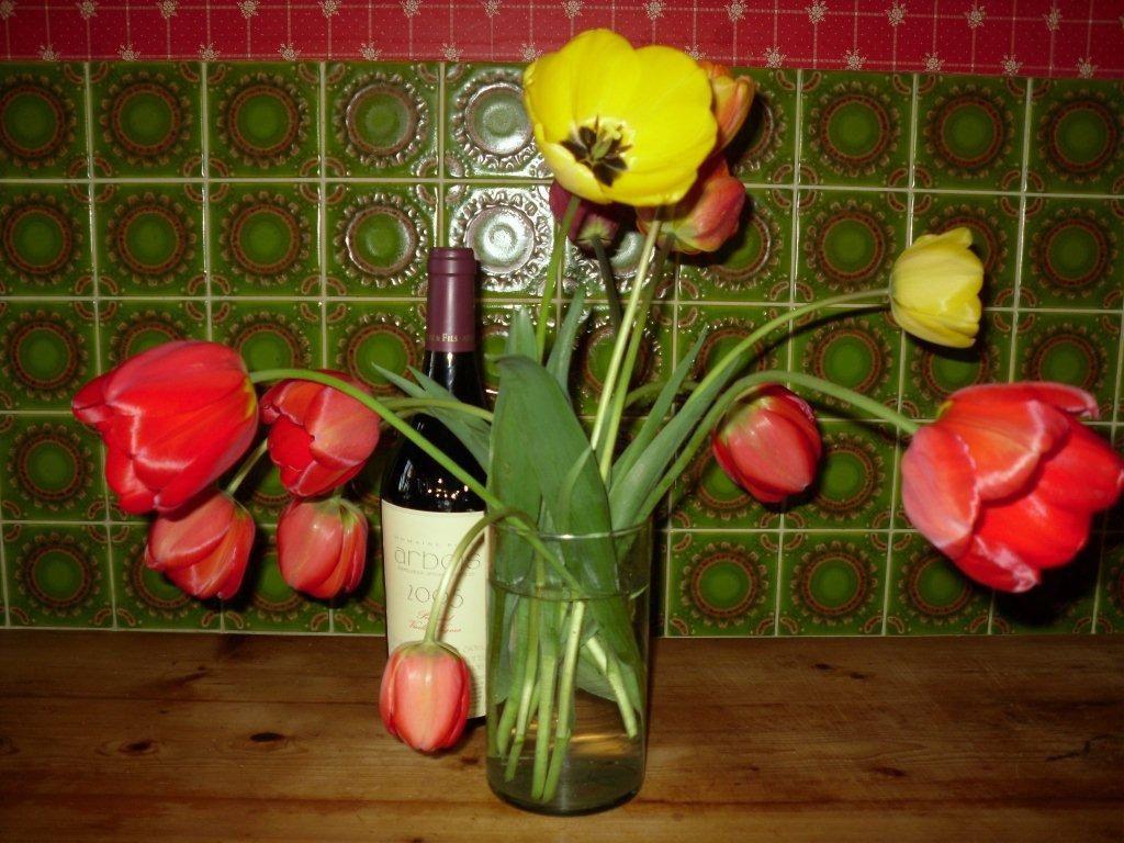 Hêtre pourpre (Fagus sylvatica purpurea) et tulipes de la voisine...
