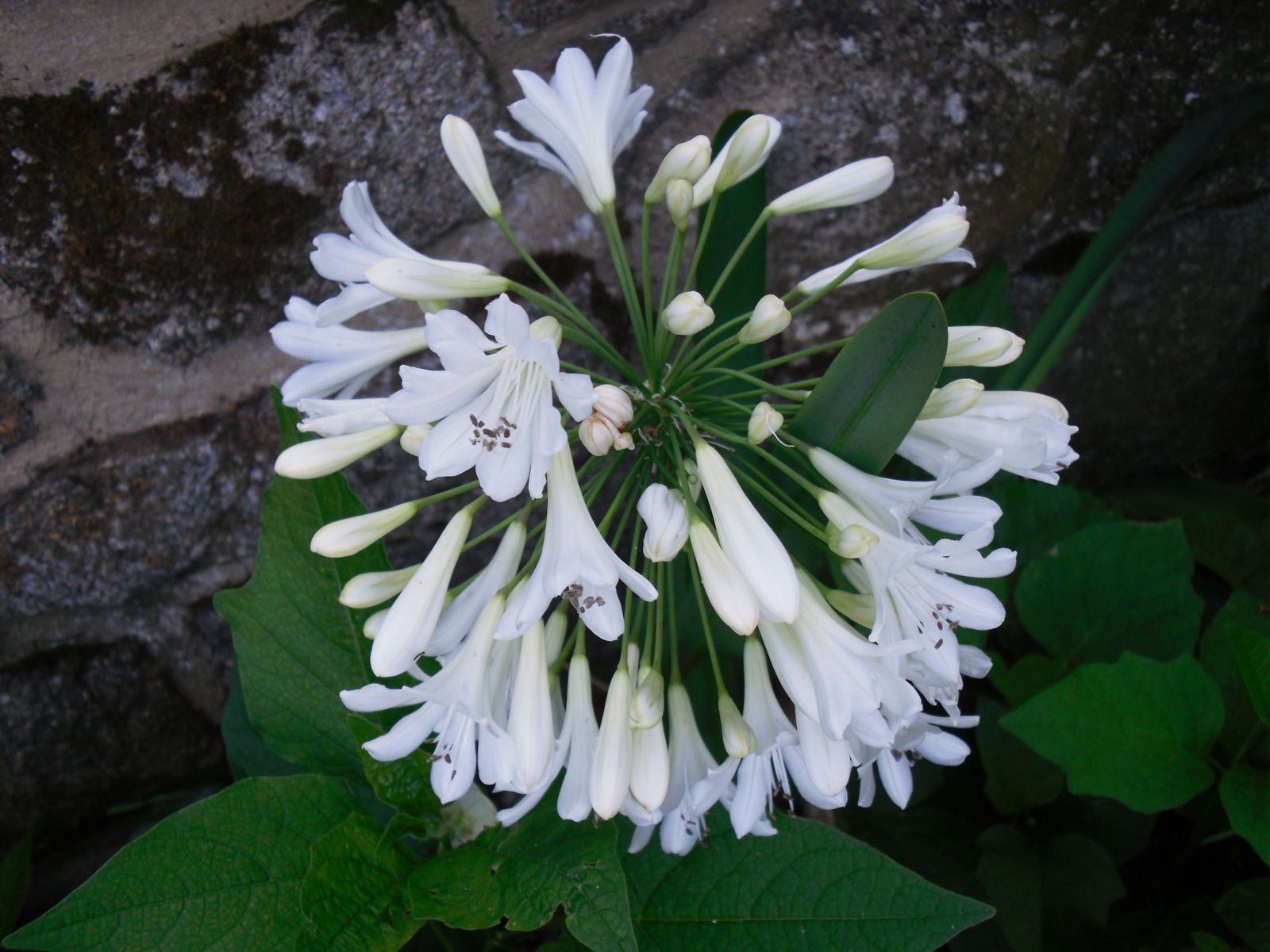 1- platycodon, 2- herbes de la pampa (Le Mans), 3- tronc cerisier, 4 et 5- agapanthe, 6- fleur inconnue, 7- ânes (Aube), 8 et 9- graines de chardon.