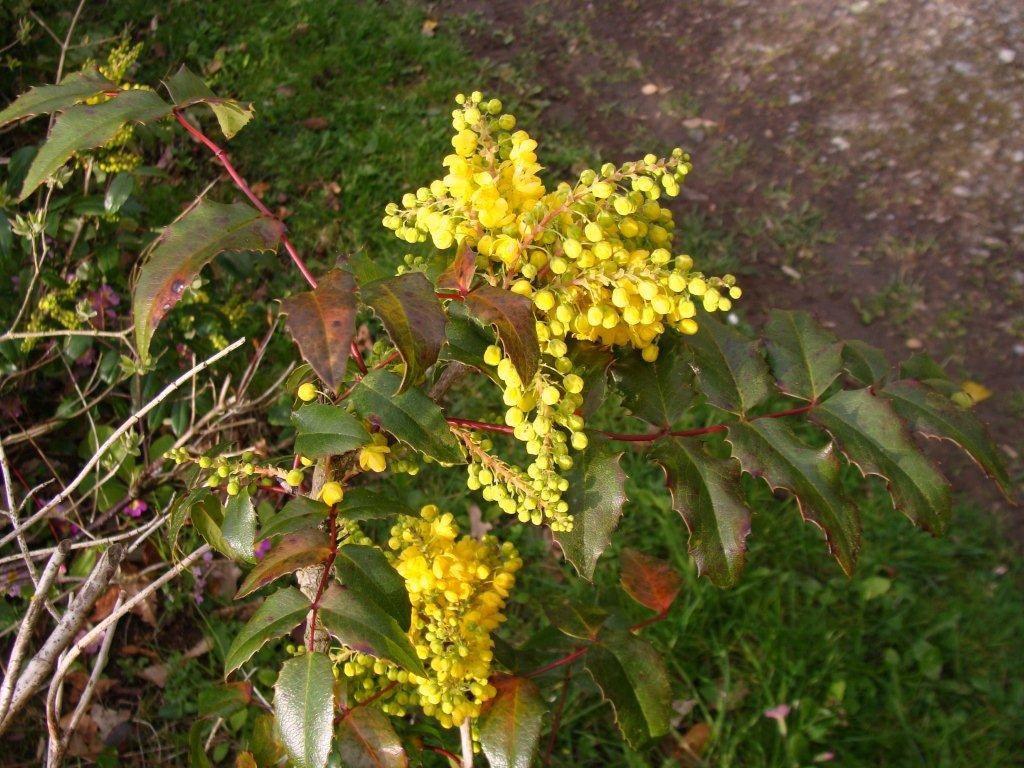 photos flora