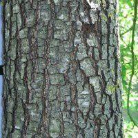 oaksofchevithornebarton.com, flickr.com, annie-claude-bolomier