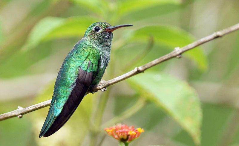 1- oiseaux.net / 2ebay.fr / 3- delcampe.net