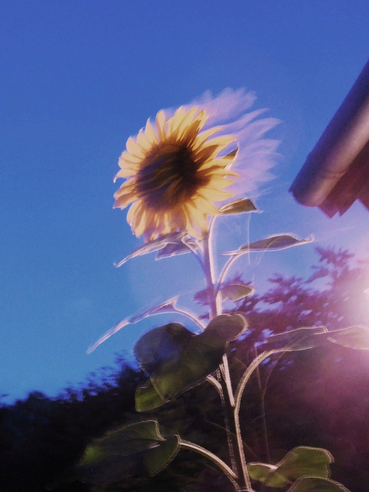 photo : flora