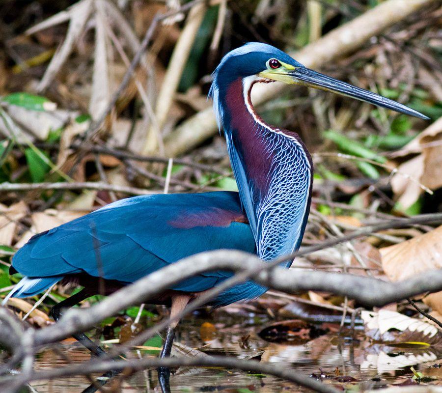 1- ecuador-birding-tours.com / 2- gepog.org / 3- ith-yaala.discutforum.com / 4- menuiserie-montner.over-blog.com