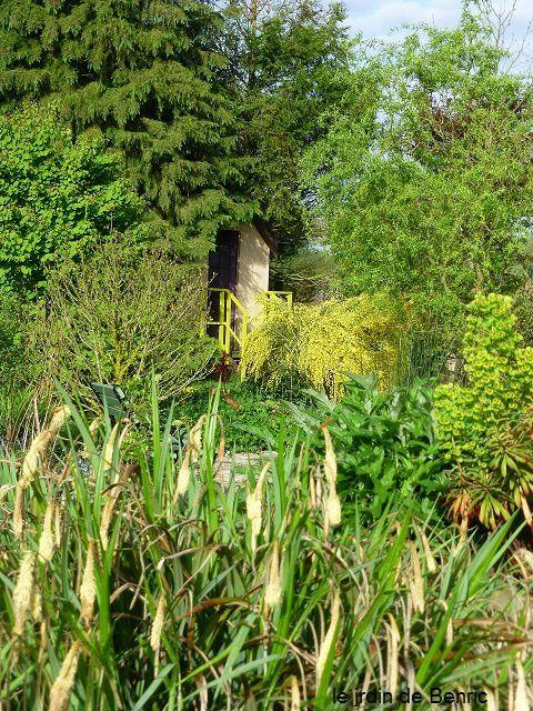 Le genêt, le soleil au jardin