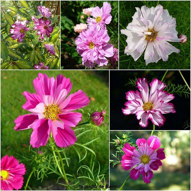 Les floraisons du Sead Of Love
