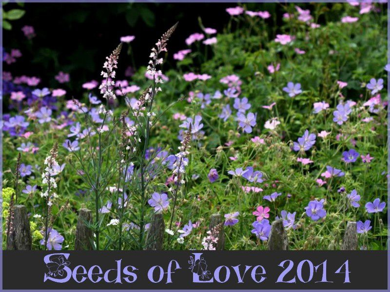 Seed Of Love 2014