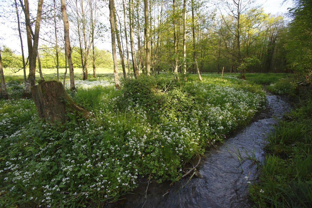 Forêt de Thiérache axonaise