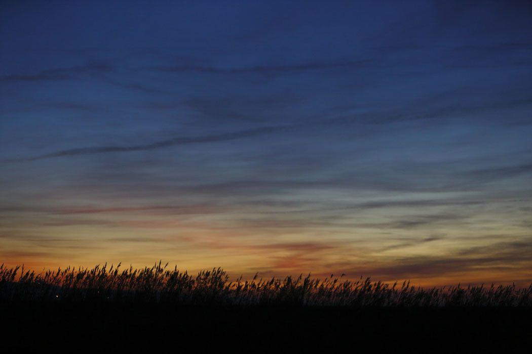 Hibou des marais (côte picarde)