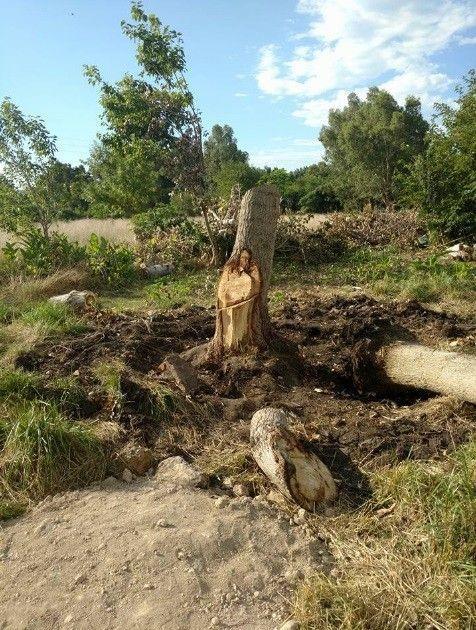 Argentine : Ils voient Jésus dans un arbre !