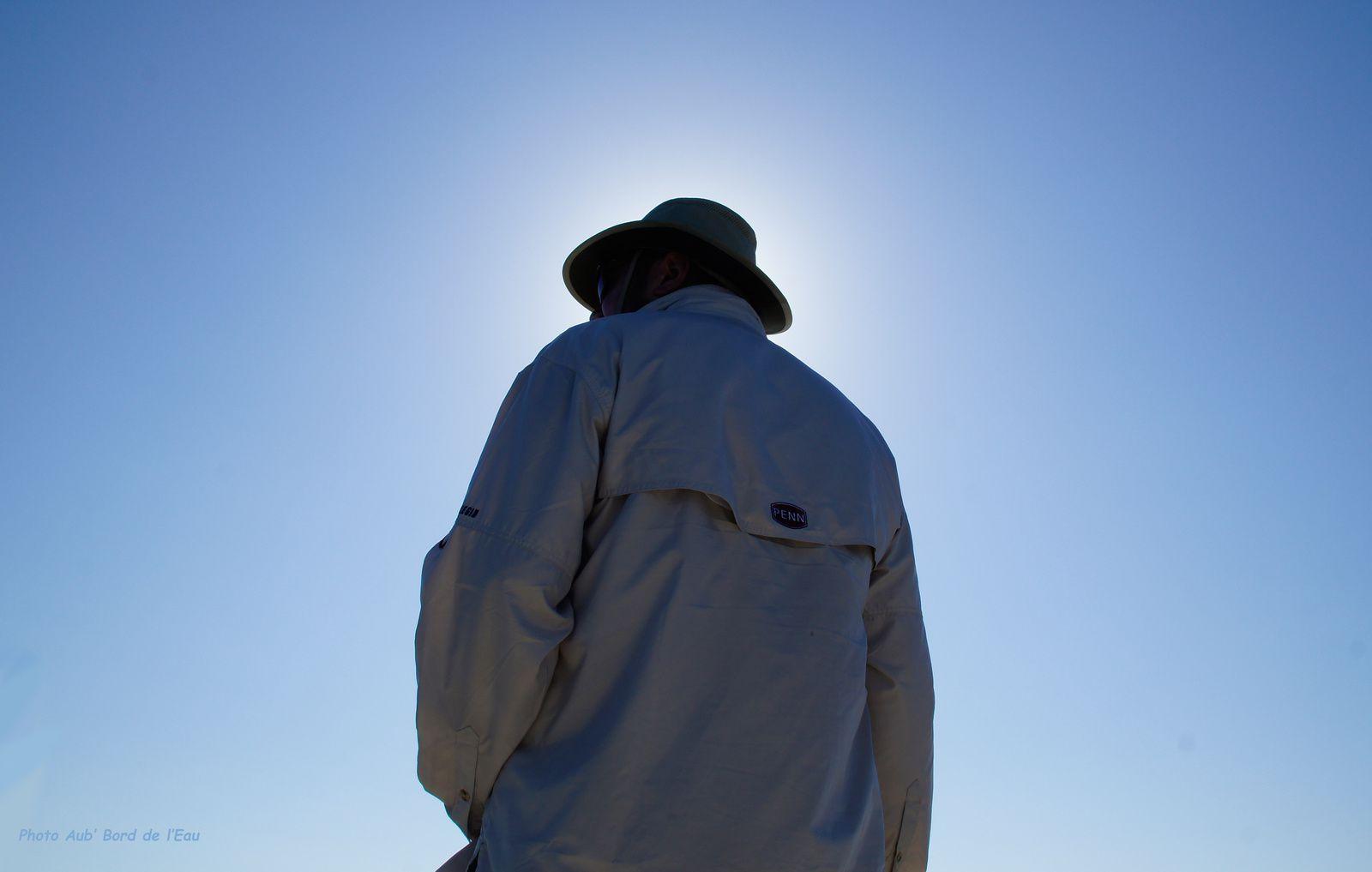 A la recherche des baleines perdues...