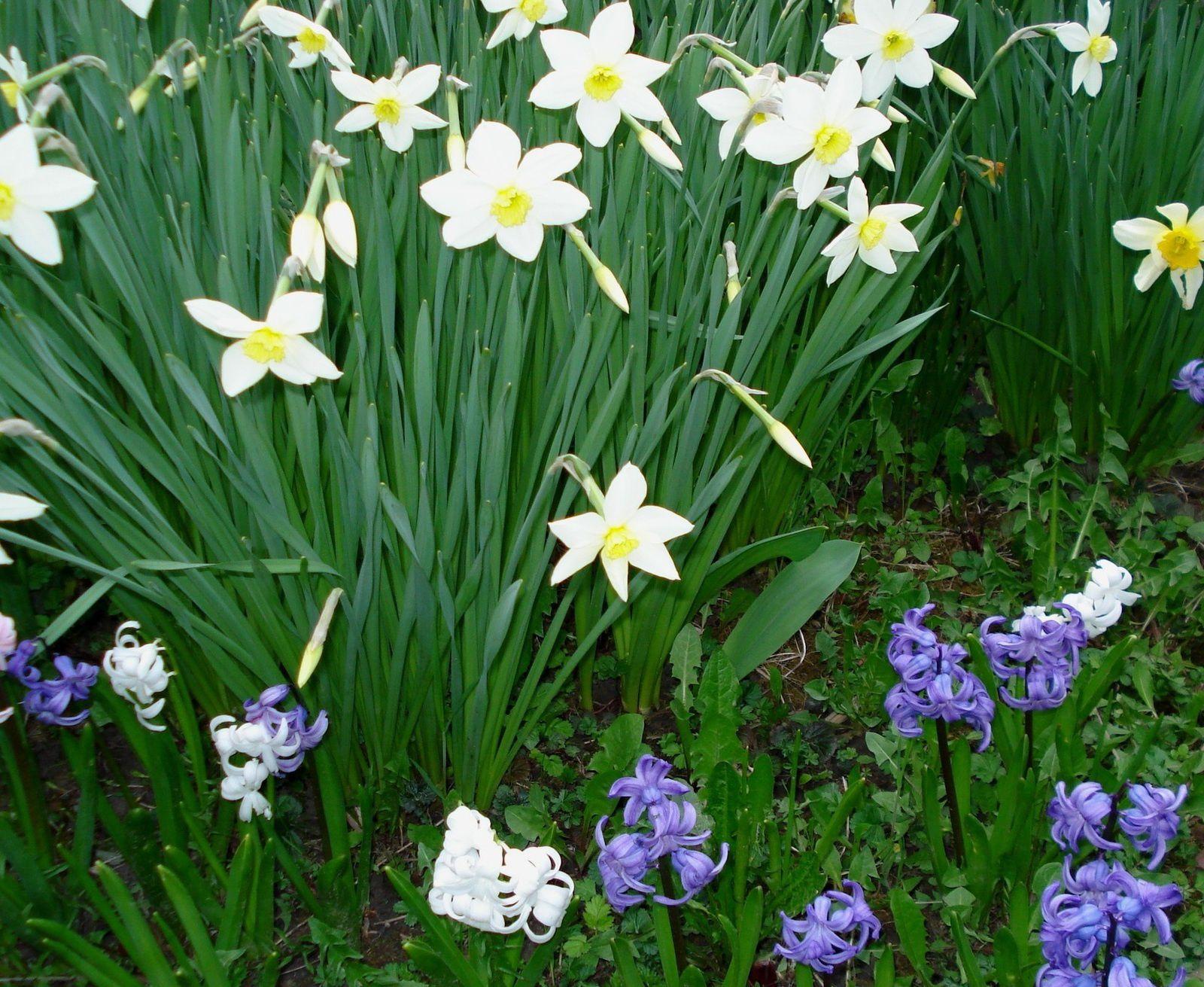 De très belles fleurs chez Nadine.