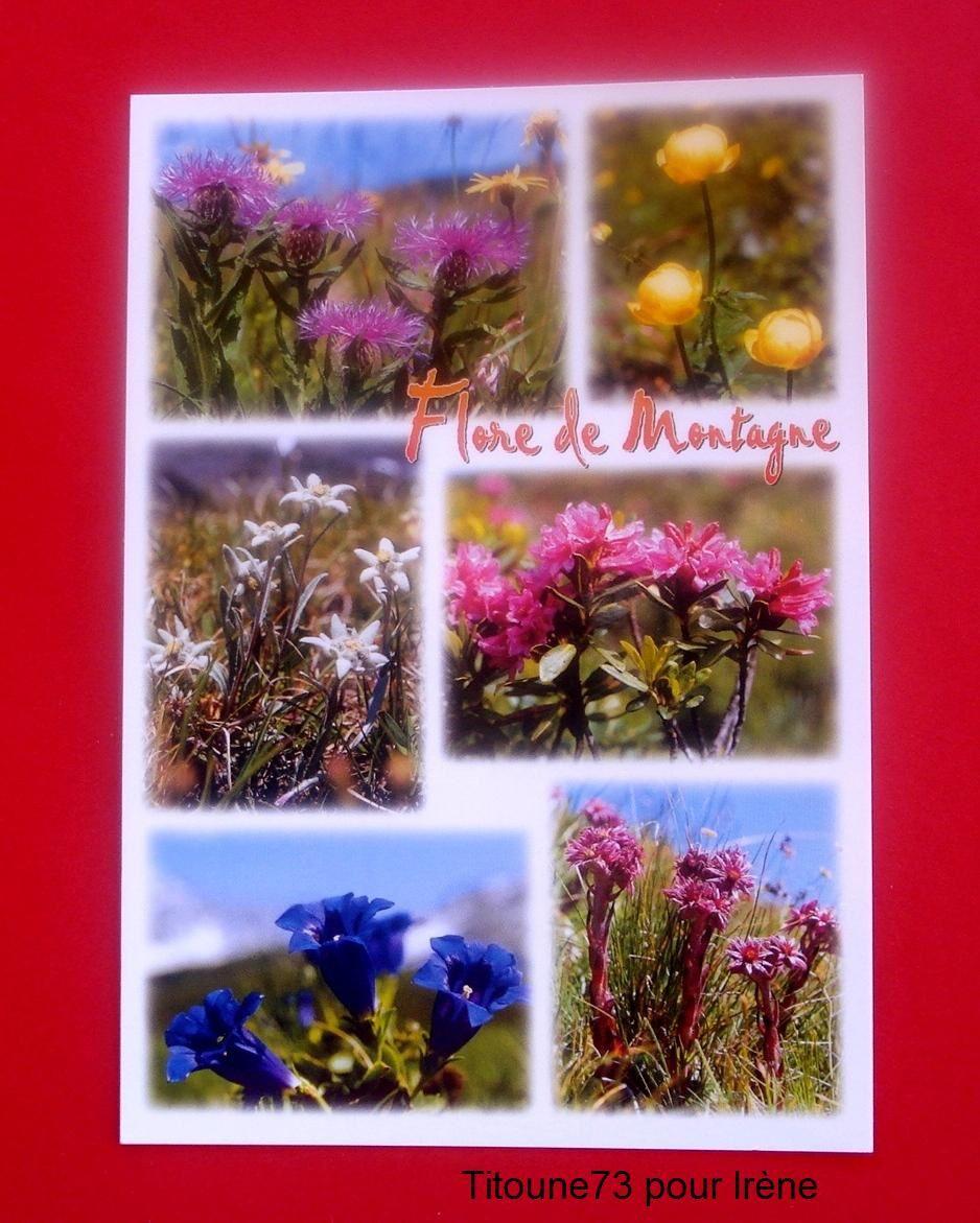 Une carte des fleurs de montagne (3).