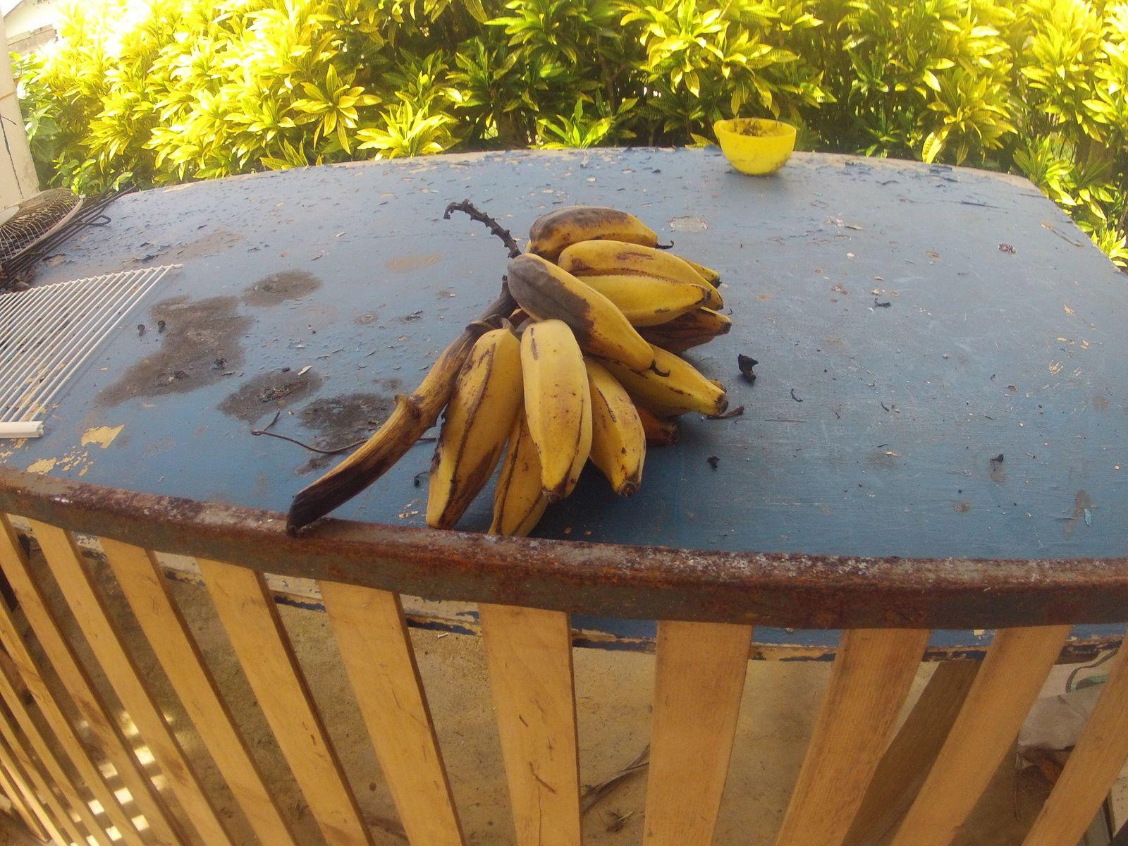 Des bananes ! En veux - tu , en voilà !
