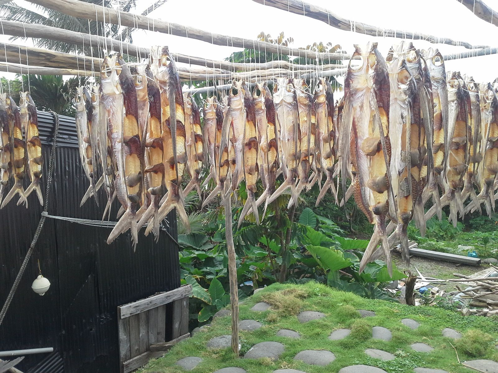 séchage du poisson