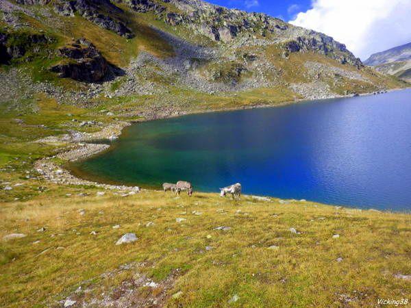 LACS DES SEPT - LAUX . . . (ALT MAXI 2184 m)