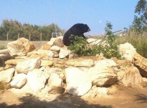 Les &quot&#x3B;vacances&quot&#x3B; de Viviane, l'ourse du Tibet
