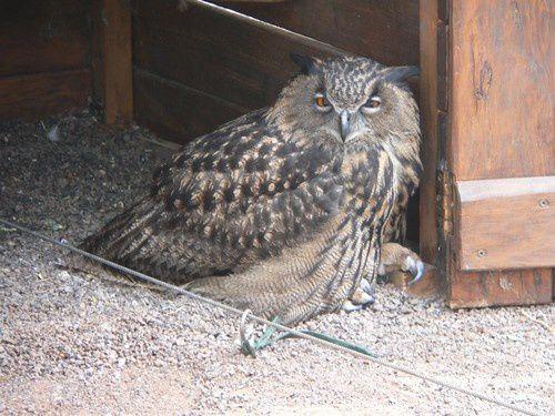Les oiseaux exotiques de Fuerteventura