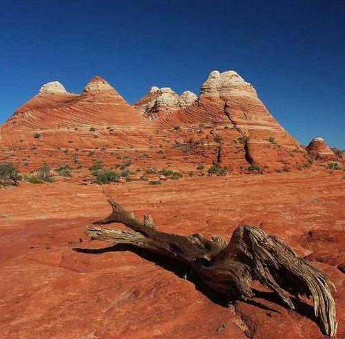 L'incroyable  parc de Coyote Buttes North en Arizona
