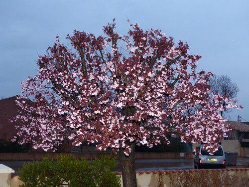 Premiers signes du printemps.