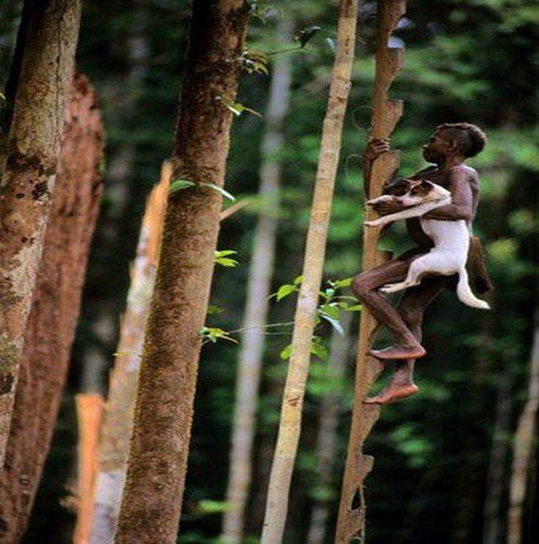 Chez les korowaï,  le peuple des arbres