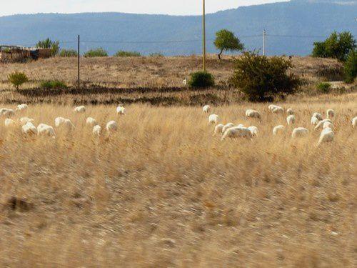 Le jour où j'ai déjeuné chez les bergers sardes.