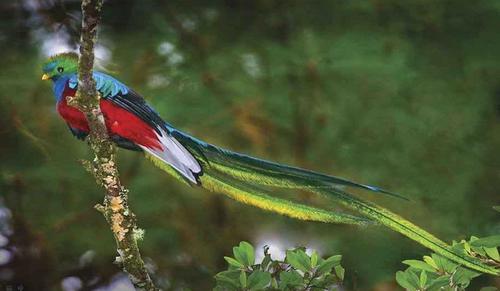 Ces pays qui ont un oiseau pour emblème national :
