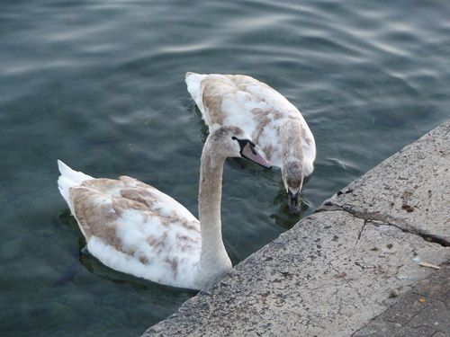 La vie sur le lac Léman.