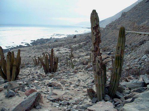 Bloqués par le sable sur la panaméricaine.