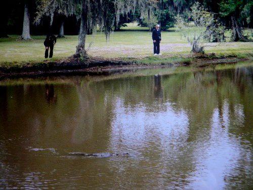 Une visite sur Avery Island en Louisiane