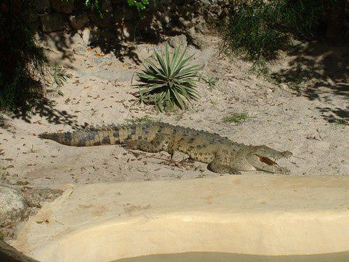 Visite du parc de Manati à Punta Cana