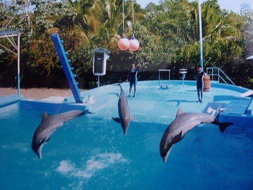 L'Hom a nagé avec un dauphin
