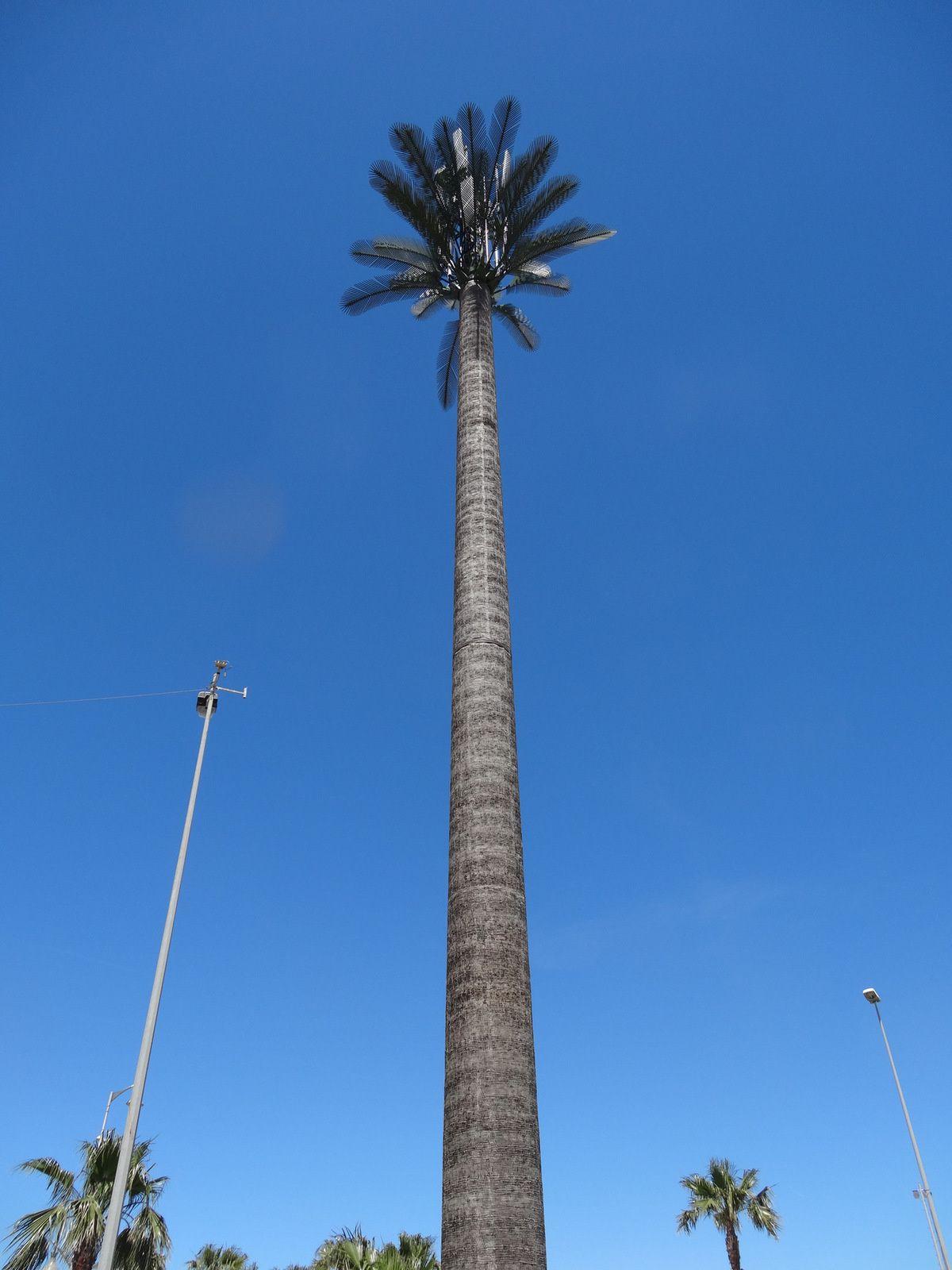 Les faux palmiers géants de Tanger