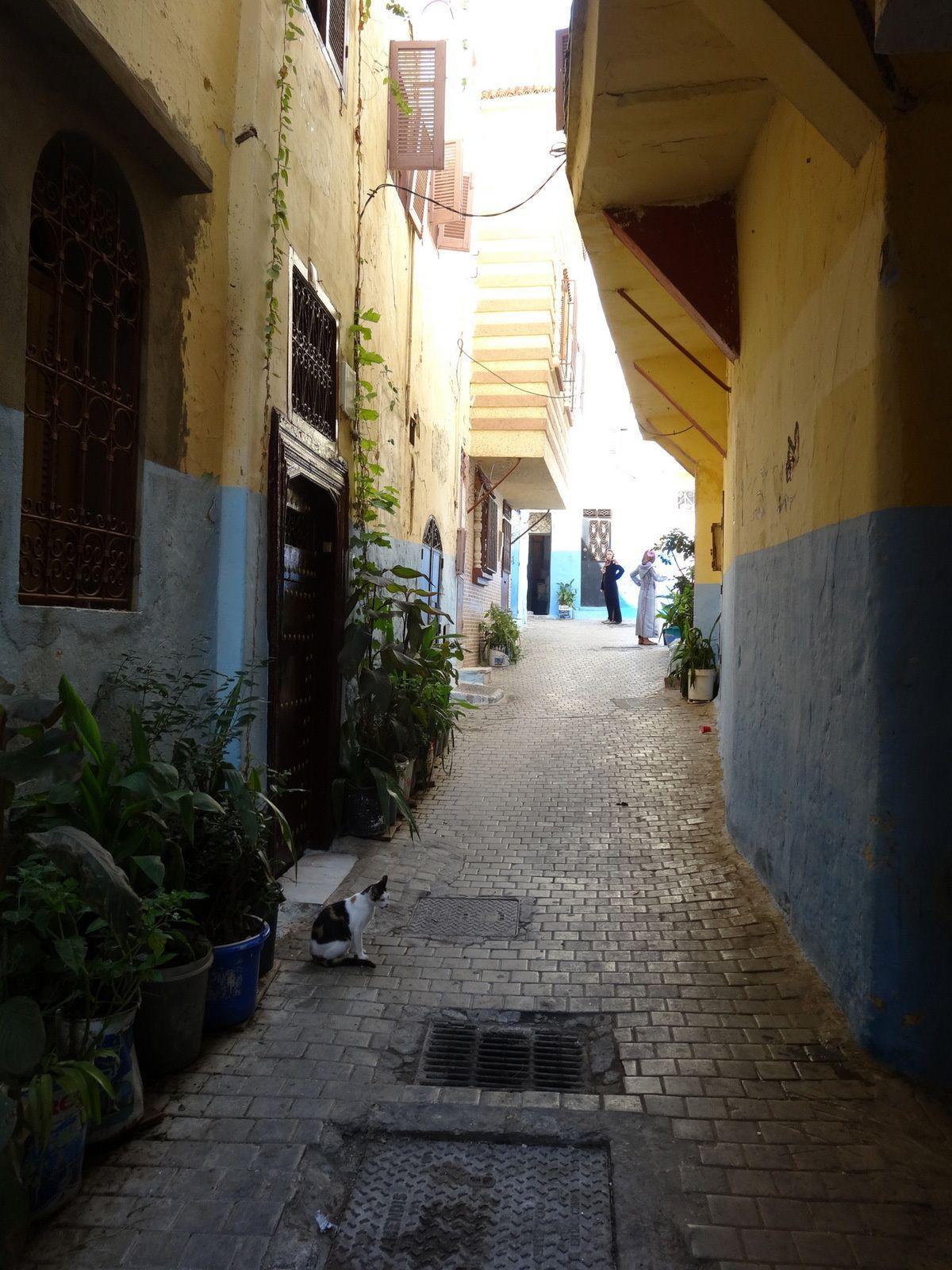 Image de la Médina de Tanger : le chat dans la ruelle