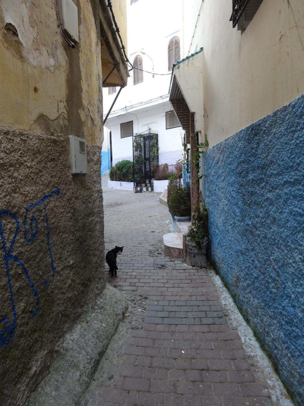 Un chat dans la Médina