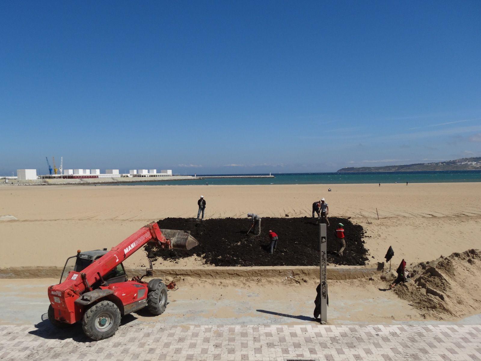 Un essai d'engazonnement du bord de la plage de sable à Tanger ??
