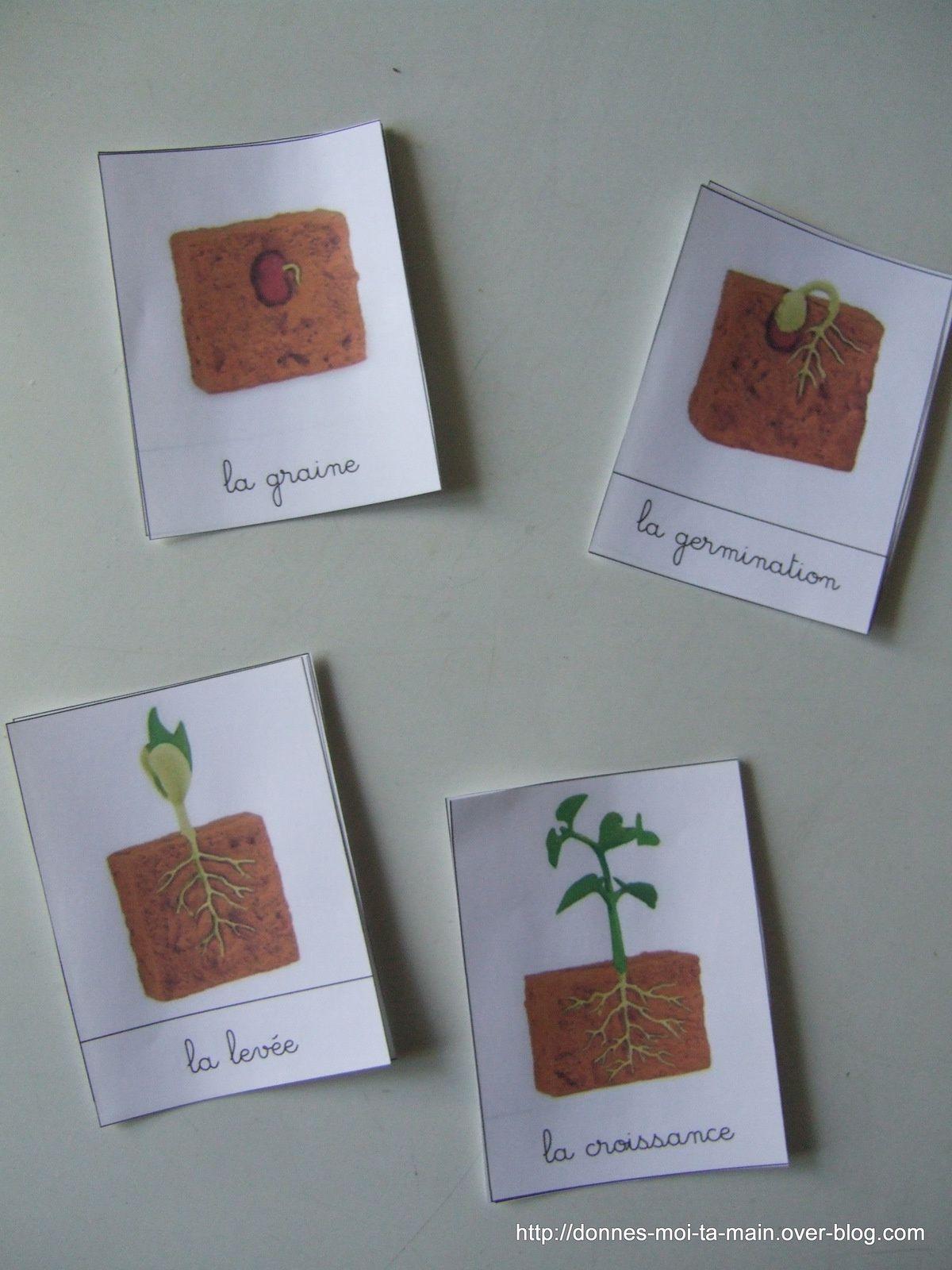 le cycle de vie d'une plante: première &quot&#x3B;approche&quot&#x3B; sous forme de fiches.