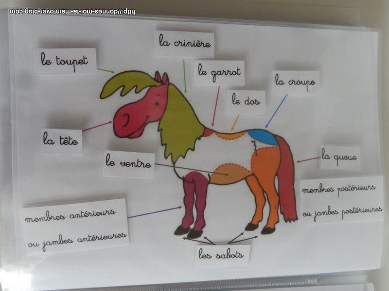 équitation : cartes de nomenclatures et autres supports