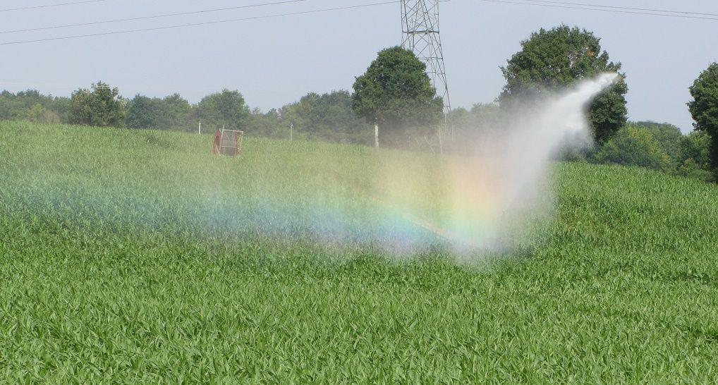 Et pour rester dans la couleur : l'arc en ciel créé par l'arrosage automatique d'un champ de maïs.