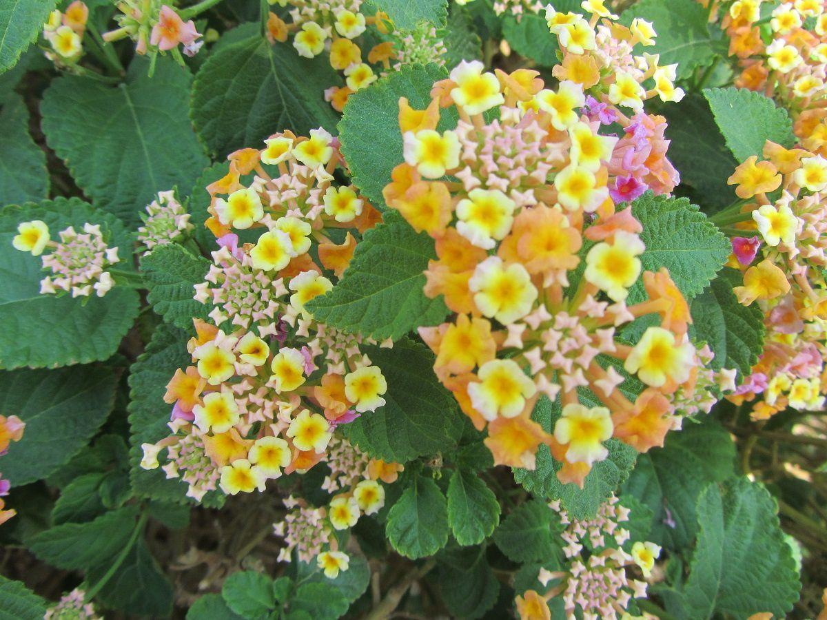 Je sais que vous n'avez rien contre un bouquet de fleurs surtout lorsqu' elles sont multicolores.