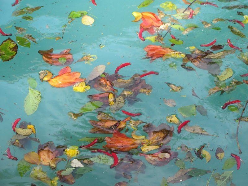Et la nature joue les peintres impressionnistes.