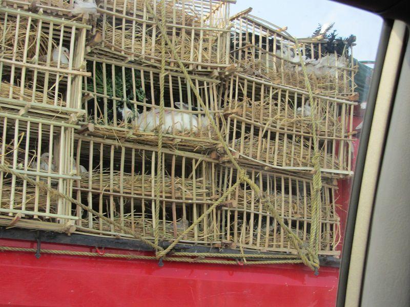 Lapins,  poulets tout dans le même panier, confectionné en bois de palmier.