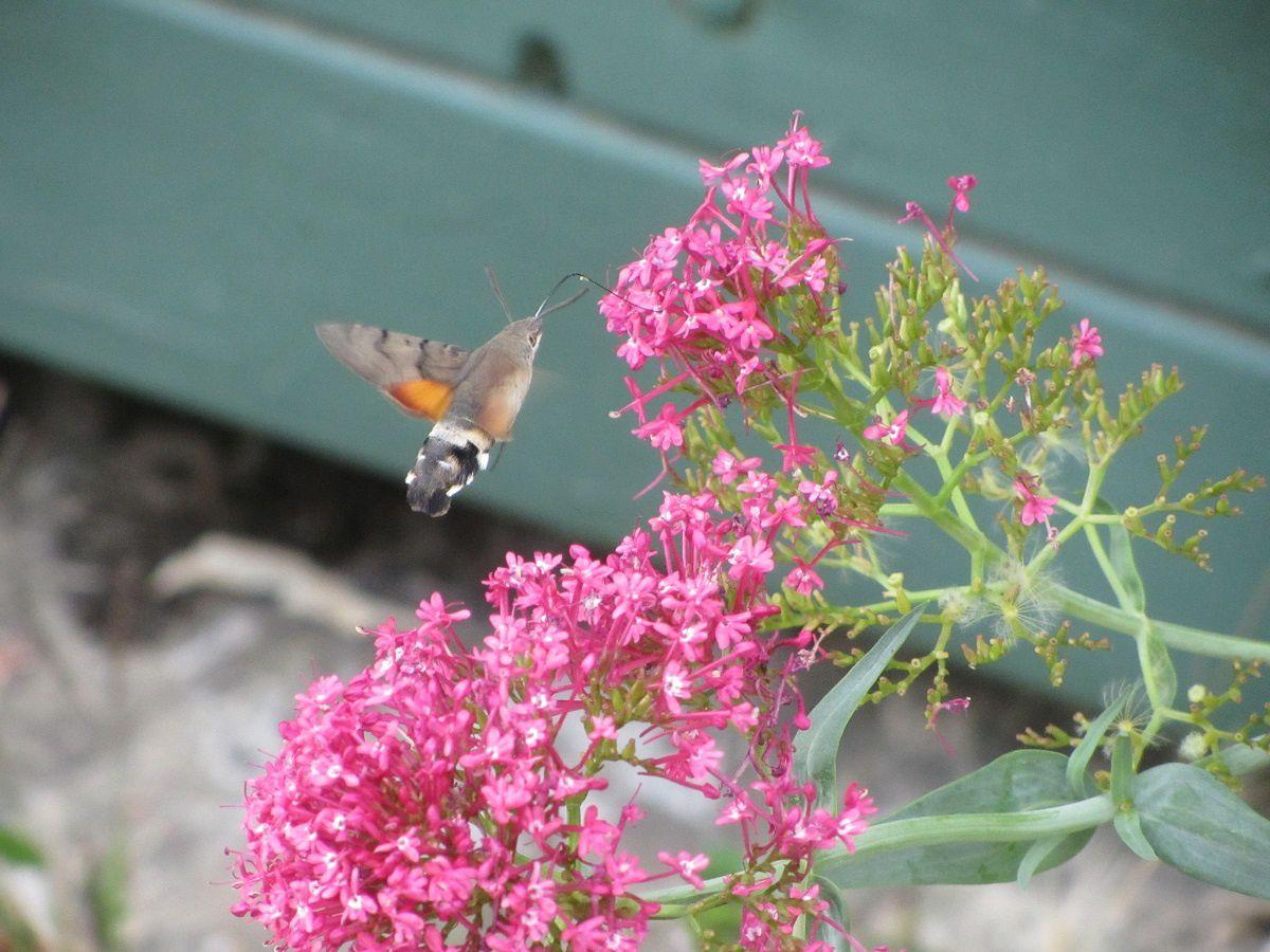 Village botanique avec ses plantes de rocaille. Nous nous émmerveillons à  la vue du plus petit oiseau du monde : le colibri.