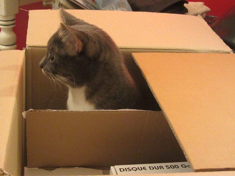 Féline a bien déménagé, montrant une fois encore ses facultés d'adaptation.