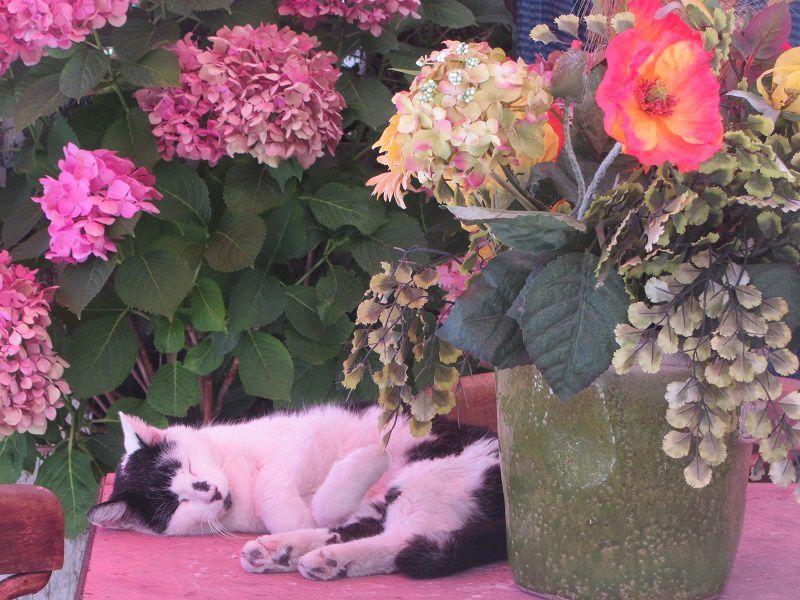 Et ce chat rose, endormi, insouciant aux touristes qui l'observe.