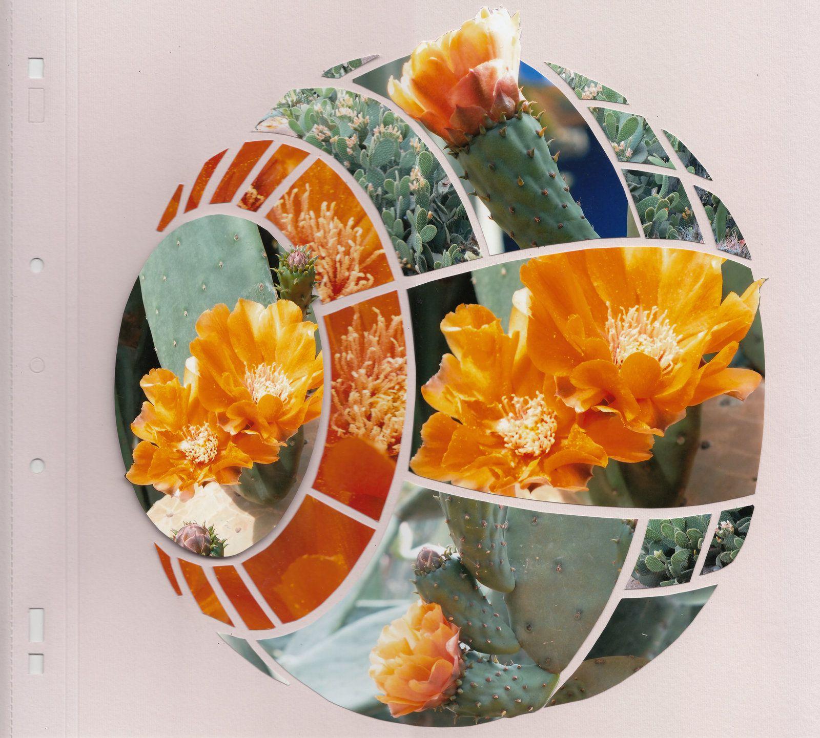 Gabarit Sphère, les cactus de Majorelle