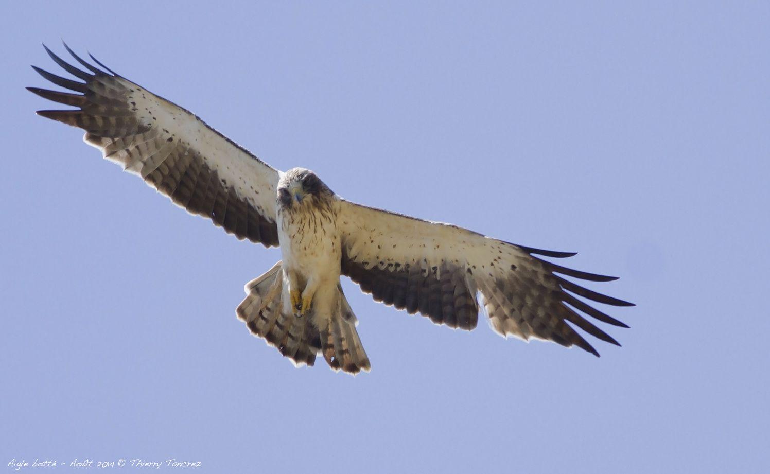 Dans les yeux de l'Aigle
